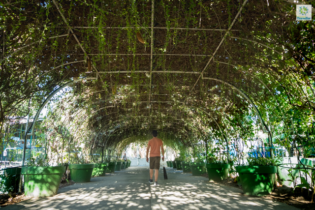 A canopy of vines at Garin farm that serves as walkway to the hilltop.