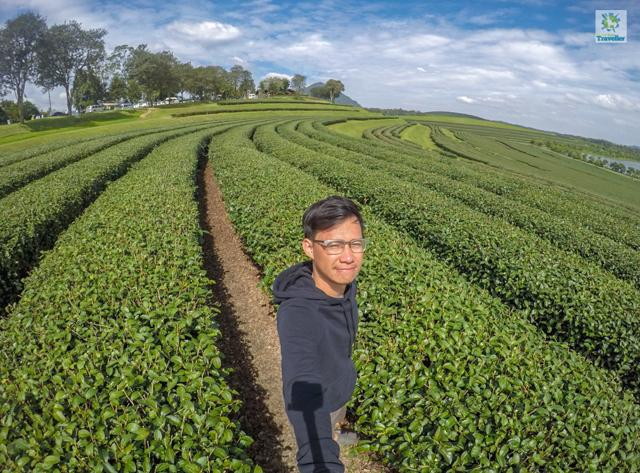 Singha Park Tea Plantation