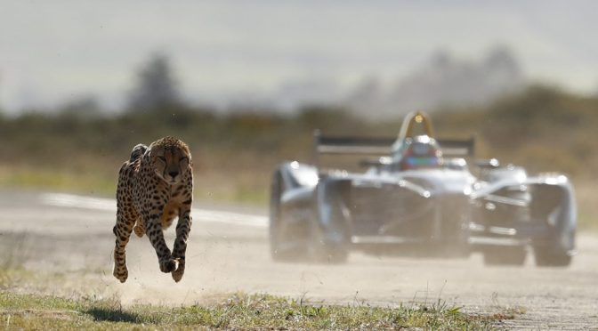 Watch as a Cheetah and Formula E race car go head to head in the South Africa Savanna!