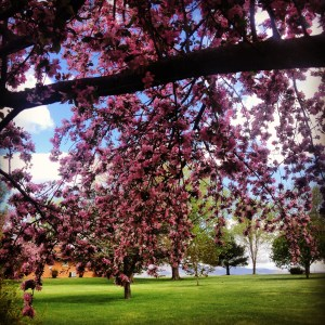 spring trees broadway Earth Day