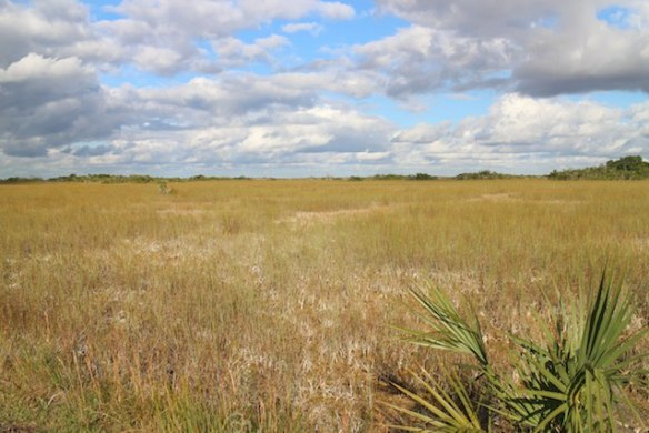 How to visit The Everglades on a flashpacker budget