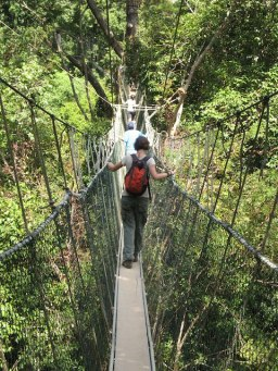 jungle canopy walk - fun and not scary at all