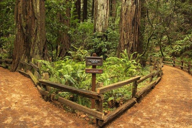 Muir Woods National Monument Hipmunk