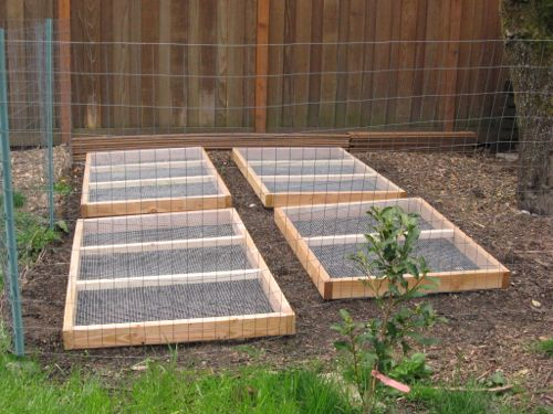 Set the DIY grazing frames over the planted seeds, water, and wait.