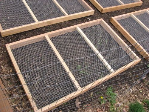 Grass or grain seeds will sprout and grow through the top of the hardware cloth for your chickens to graze.