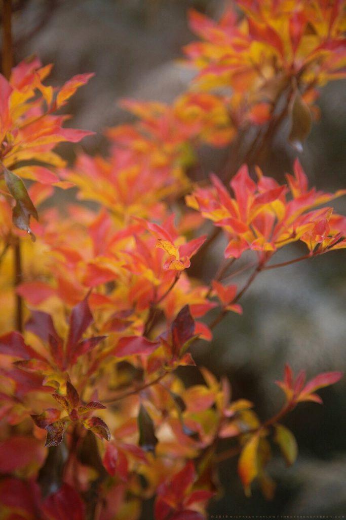 Autumn Garden Design The Gardener S Eden