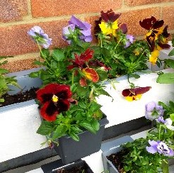 Small Pallet planter with flowers