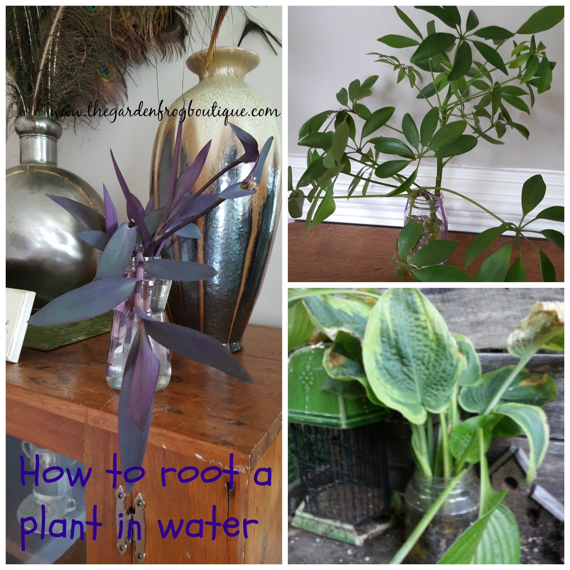 How To Root A Plant In Water The Garden Frog Boutique