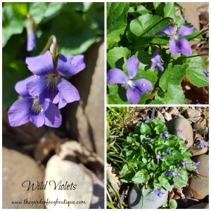 Gardening without the rules, wild violets