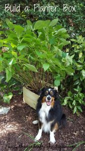 Build a planter box from dog-ear fence pickets from the Home Depot