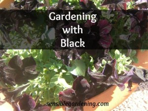 #BB Color our World Black, garden, home, recipe