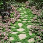 Stepables Perfect Plants For Paths And Walkways The Garden Glove