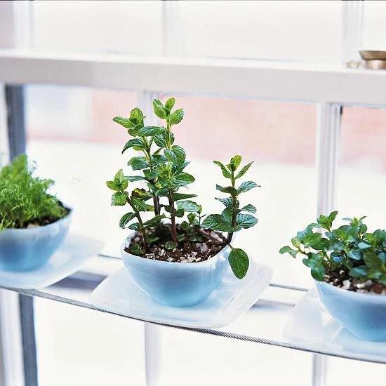 Walmart Outdoor Plants