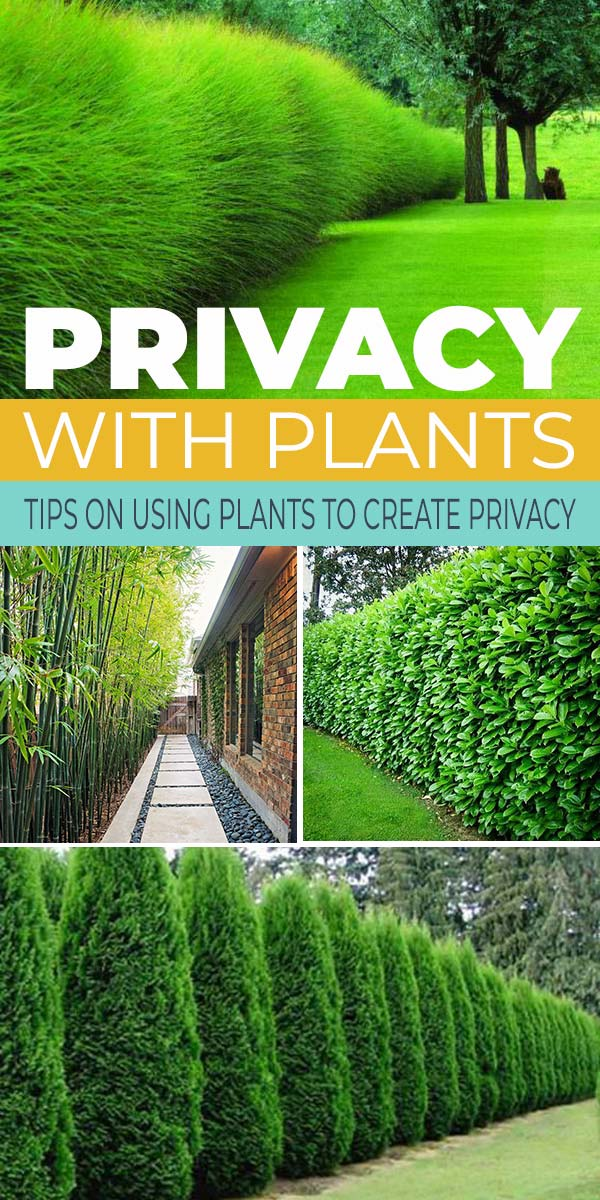 privacy with plants the garden glove