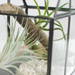 How To Make An Air Plant Terrarium To Display Your Plant Pets The Garden Glove