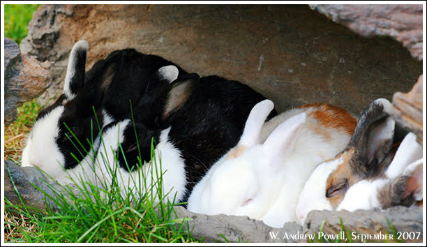 Toronto Zoo - Bunnies in a log