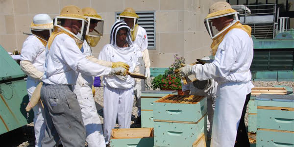 Royal York Hotel - The Honey Harvest