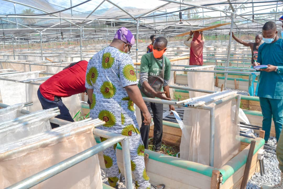 Fayemi To Commission Second Biggest Snail Farm In Africa