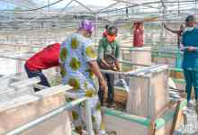 Photo of Fayemi To Commission Second Biggest Snail Farm In Africa