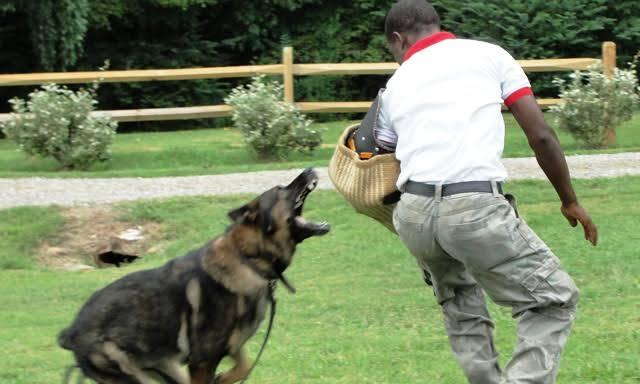 Germany To Build Dog School In Nigeria