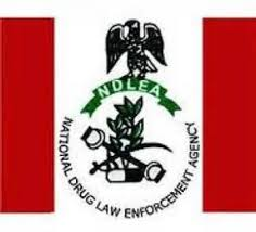Role Of NDLEA In Controlling Drug Abuse During, After Transforming Drug Addicts