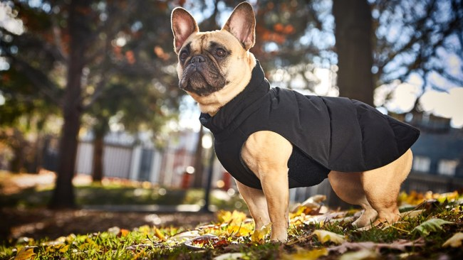 5-second dog parka