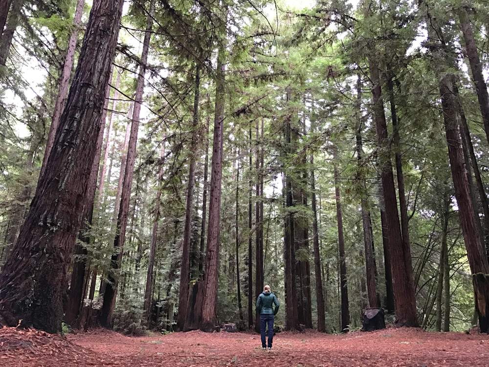 Camp Navarro Redwoods