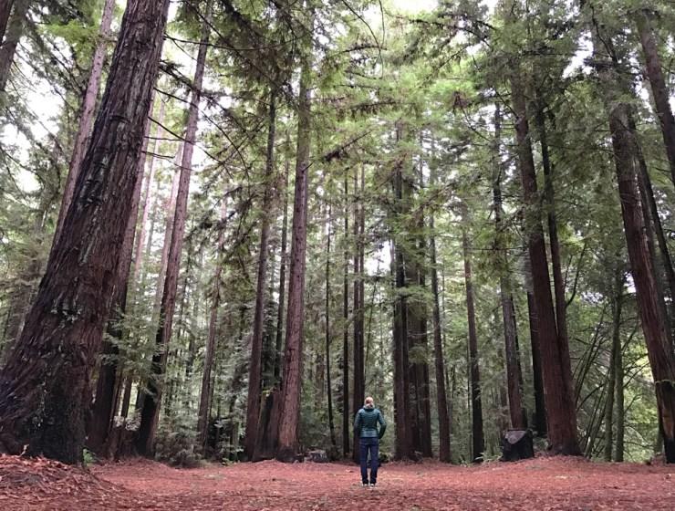 Camp Navarro Redwoods