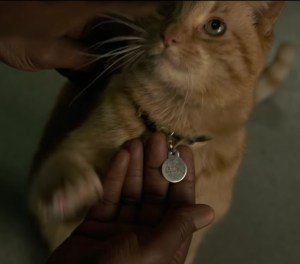 captain marvel's cat Goose