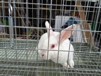 We bought a bunny! – Originally published by Joshua 4/25/15