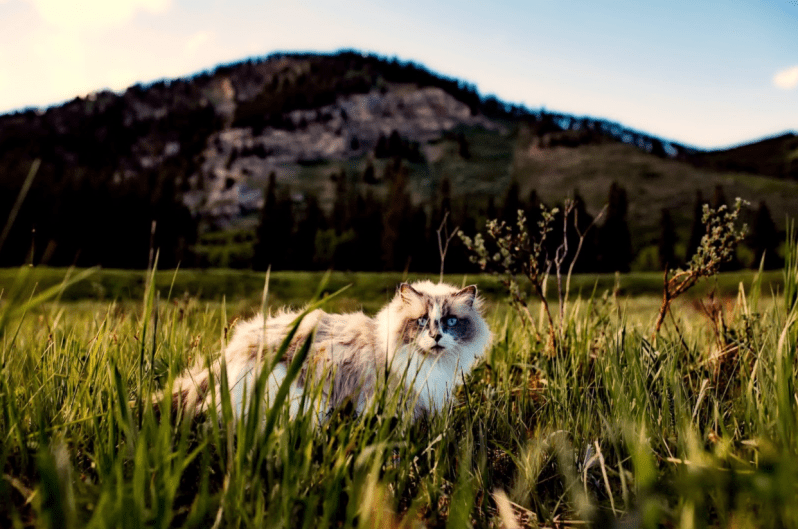 travel with cat on vacation