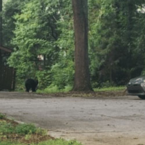 Black bear spotted in Marietta