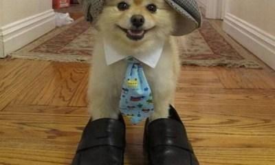 ayakkabı giyen köpek