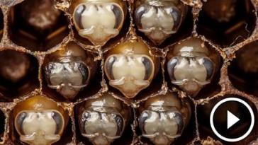 arının yaşamı