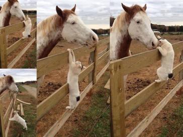 at ve kedilerin dostluğu