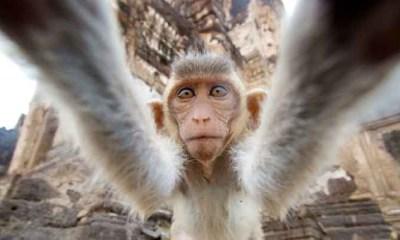 Katmandu-maymun-tapinagi