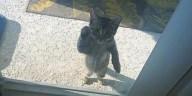 Lütfen-beni-içeri-al-diyen-kediler-2