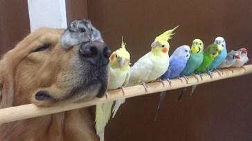 hayvan dostluğu