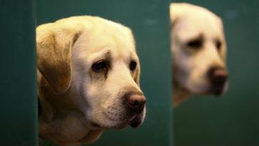 köpeğin gözlerine bakma