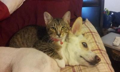 köpekler ve kediler