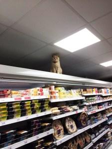 supermarket-kedi