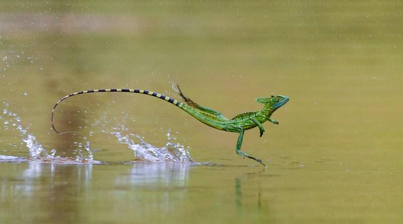5 animali che fanno cose incredibili - TheGiornale.it