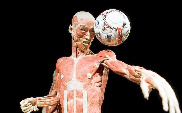 the human body exhibition - the giornale.it