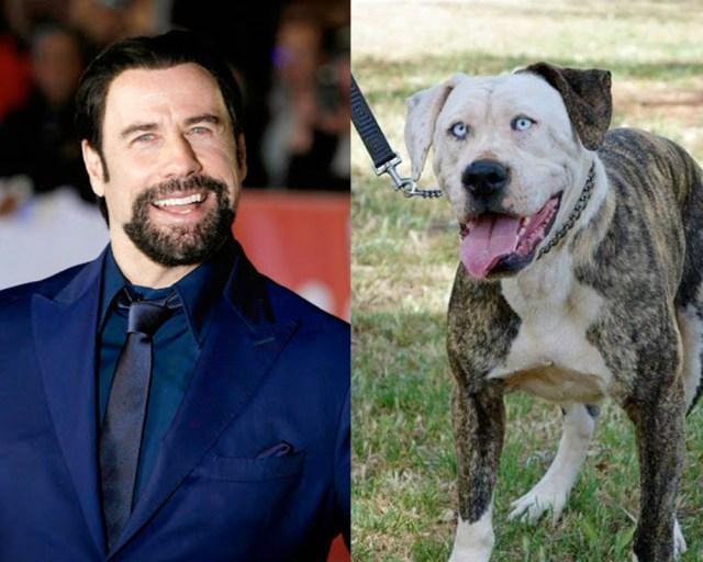 cani che assomigliano a personaggi famosi
