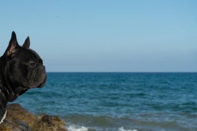 spiagge per cani in Liguria - TheGiornale.it