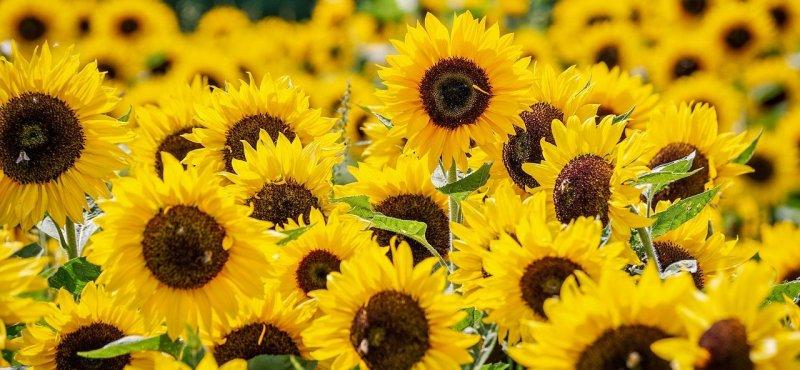 fioriture più belle del mondo