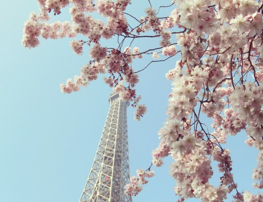 Eiffel Tower Paris Cherry Blossom