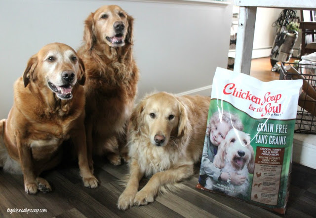 Chicken Soup For The Soul Dog Food & Treats Giveaway
