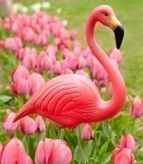 Happy Pink Flamingo Day!