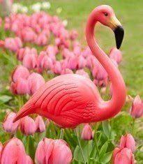 Happy Pink Flamingo Day!